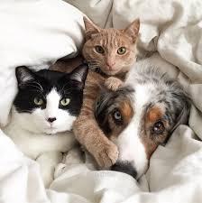 1-dog-2-cats