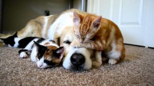 kittens-and-dog-2